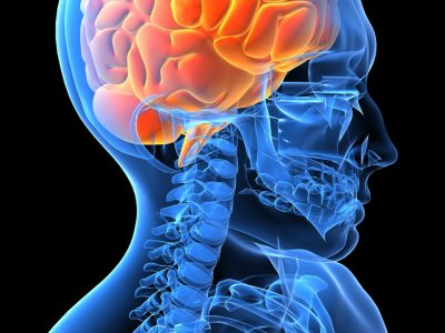 First Aid Courses In Brisbane - Brain